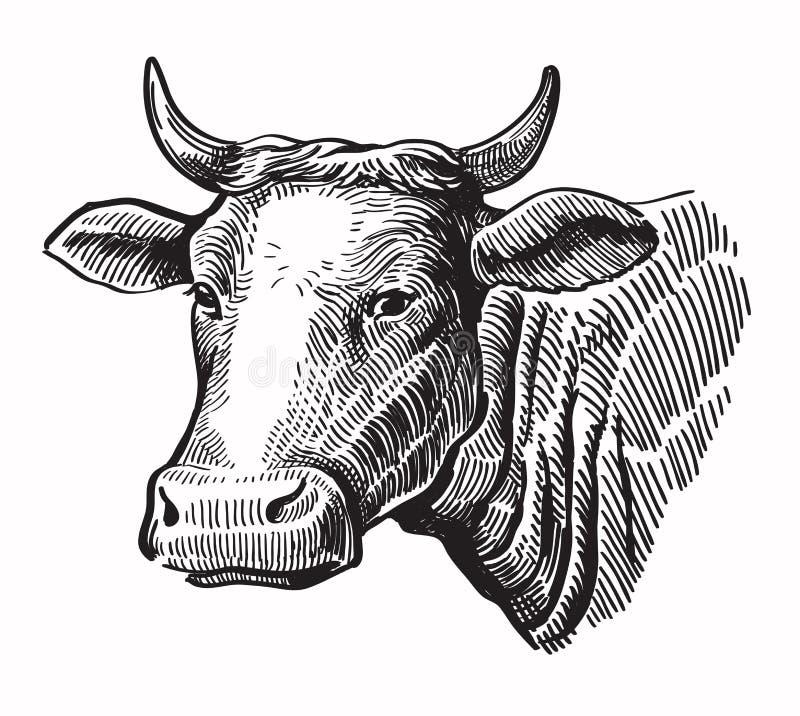Vaca preta do vetor ilustração stock