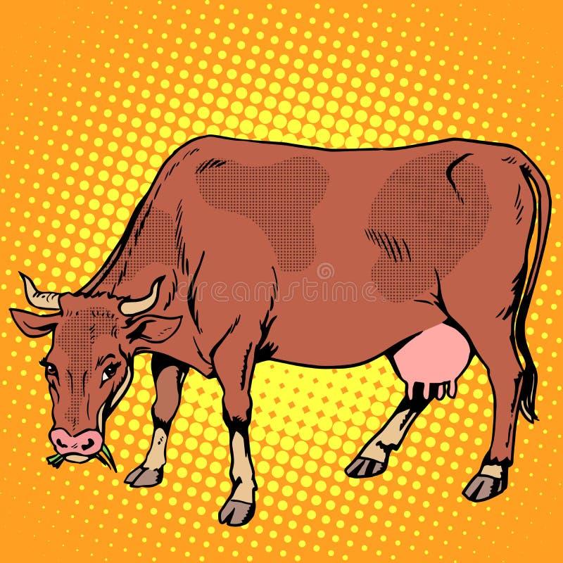 Vaca que come animais de exploração agrícola da grama ilustração stock
