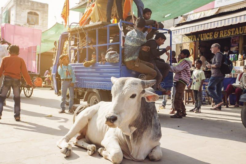 Vaca santamente que anda livremente nas ruas da cidade de Pushkar imagens de stock royalty free