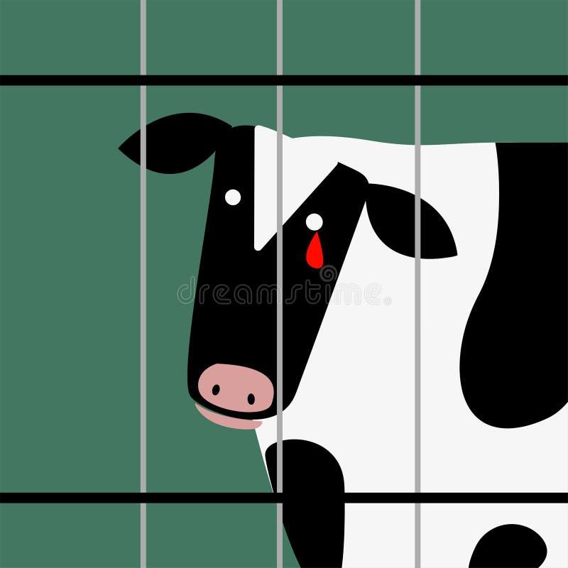 Vaca triste no rasgo ensanguentado de grito do captiveiro ilustração royalty free
