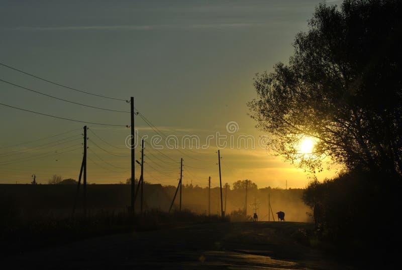Vaca y perro en un villagestreet en la puesta del sol imagen de archivo