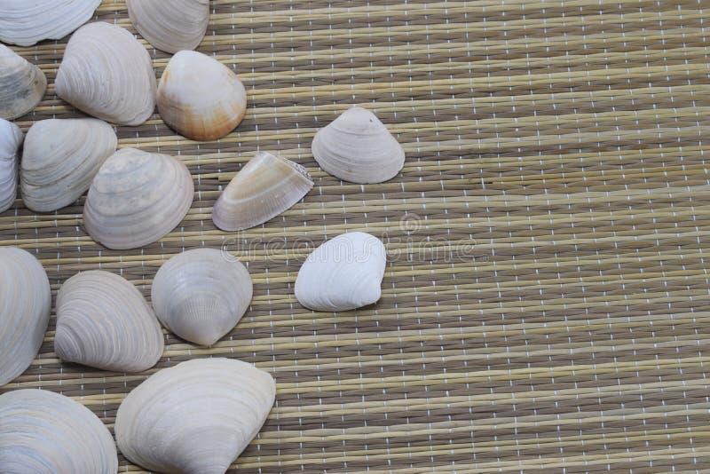 Vacaciones, coquillages se trouvent sur la couverture de plage photo stock