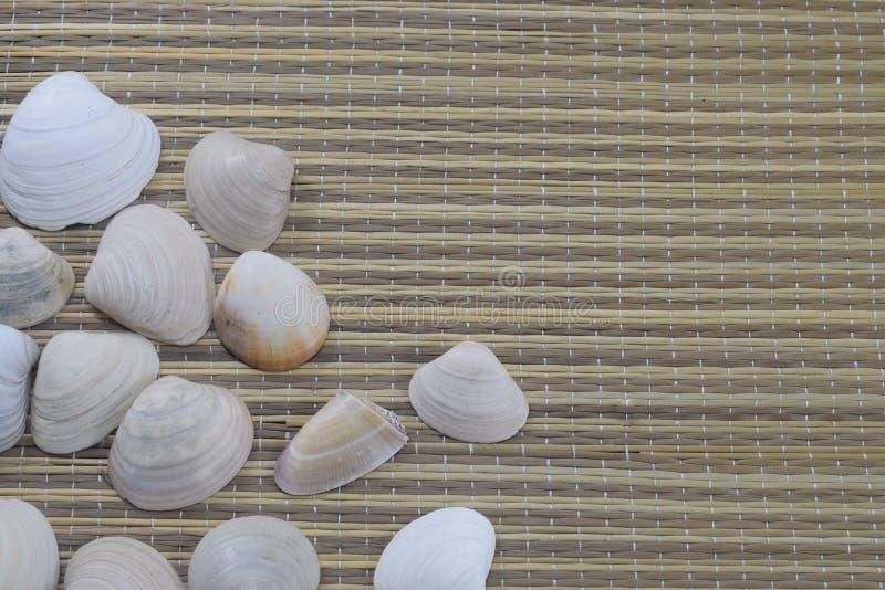 Vacaciones, coquillages se trouvent sur la couverture de plage photos libres de droits
