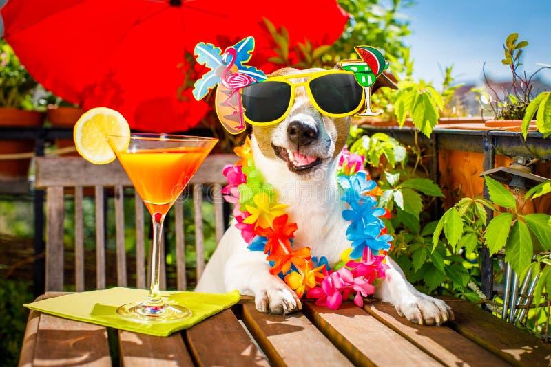 Vacaciones de las vacaciones de verano del perro de la bebida del cóctel en balcón fotos de archivo