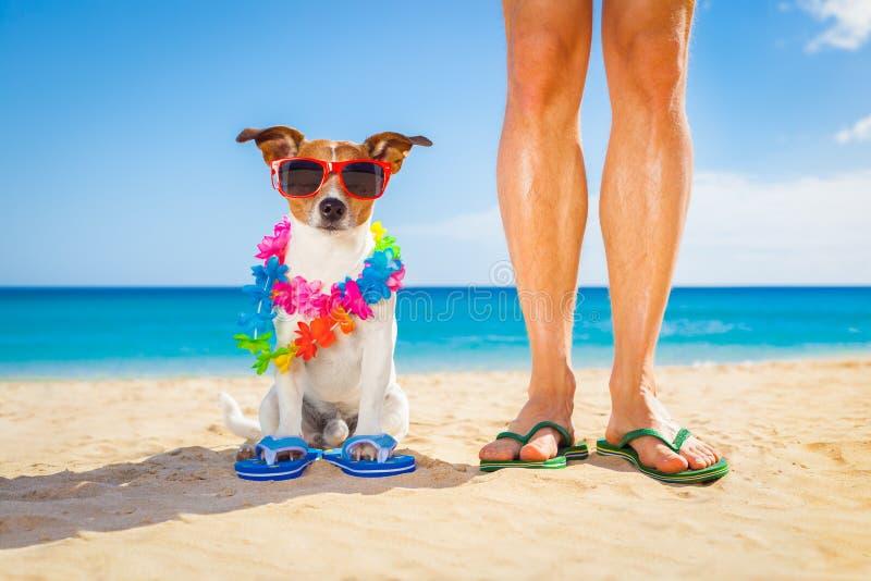 Vacaciones de verano del perro y del dueño foto de archivo