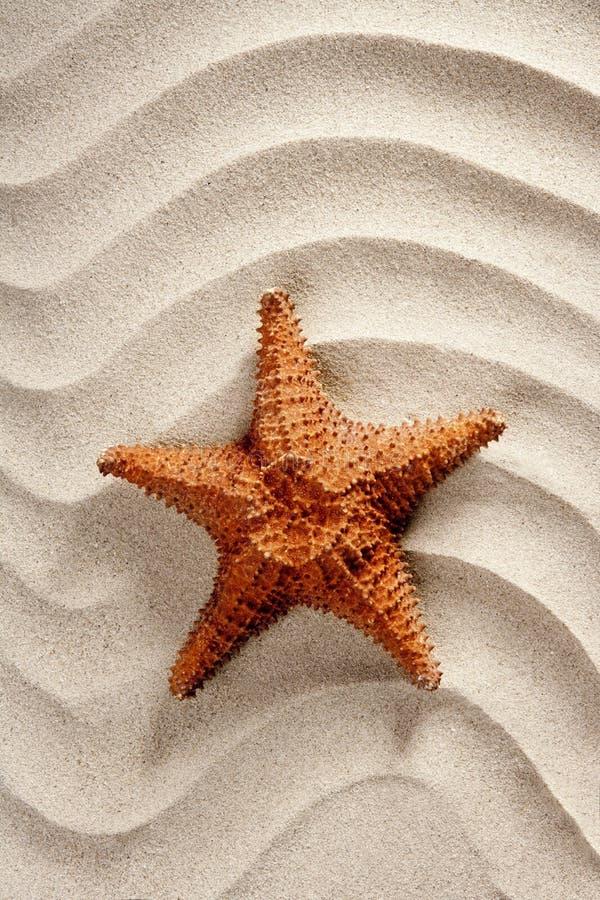 Vacaciones de verano onduladas blancas de las estrellas de mar de la arena de la playa fotos de archivo