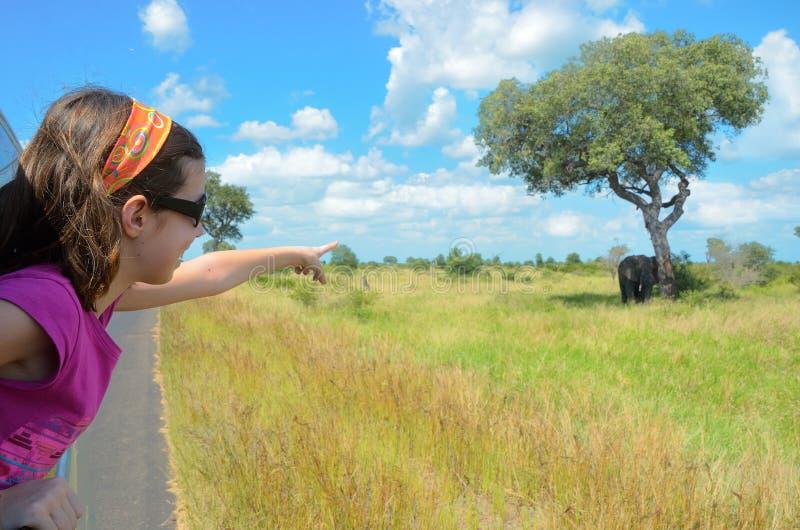 Vacaciones del safari de la familia en África, niño en el coche que mira el elefante en la sabana, parque nacional de Kruger foto de archivo libre de regalías