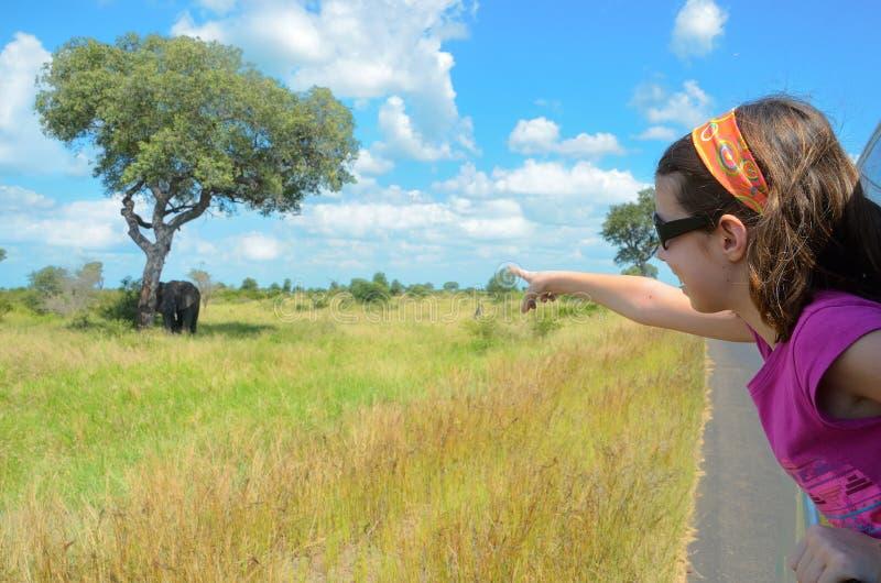 Vacaciones del safari de la familia en África, niño en el coche que mira el elefante en la sabana, parque nacional de Kruger foto de archivo