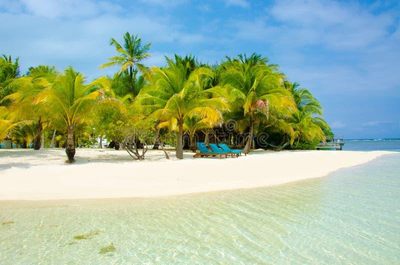 Download Vacaciones En La Playa Del Paraíso Foto de archivo - Imagen de playa, coco: 41918224