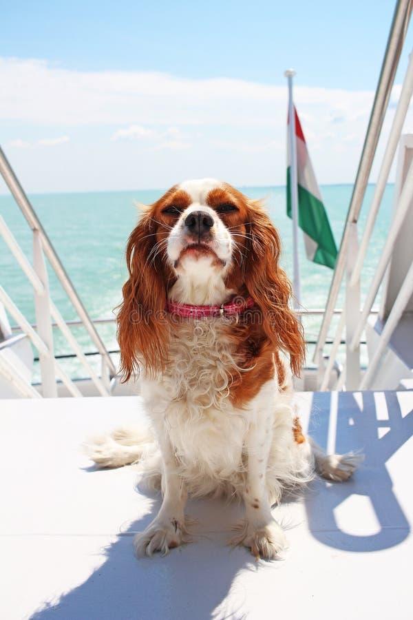 Vacances d'été de voyage de bateau de bateau avec le chien photos libres de droits
