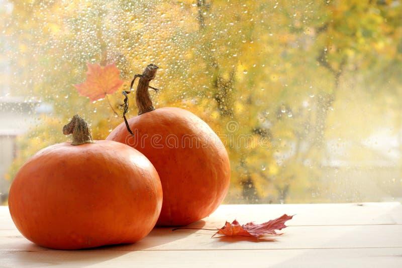 Vacances de attente d'automne images libres de droits