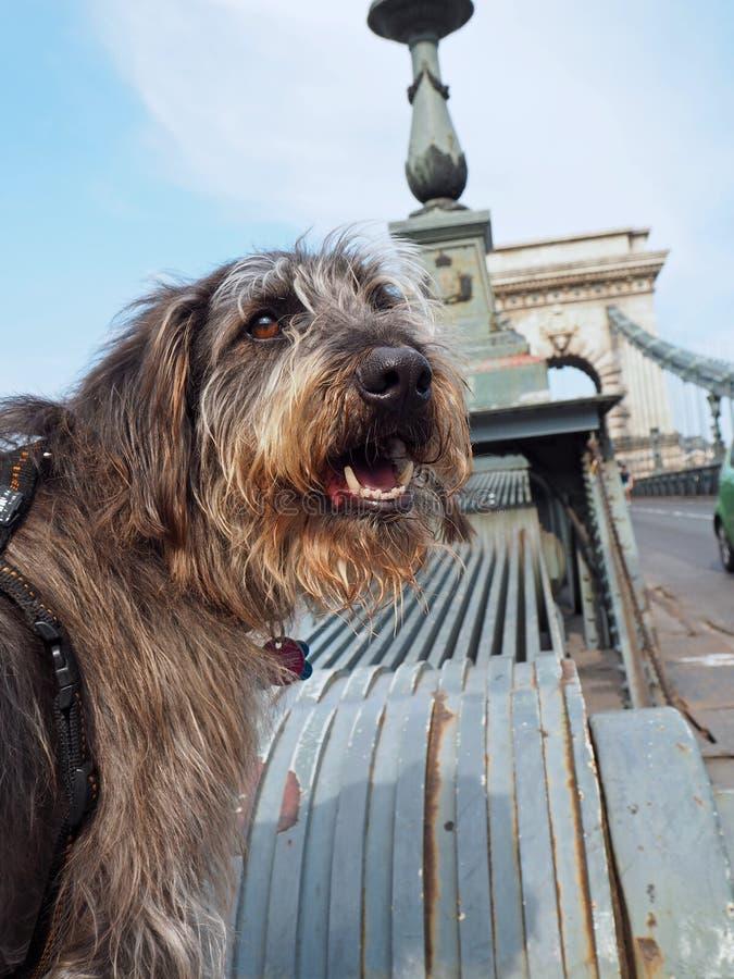 Vacanza con un cane a Budapest immagini stock