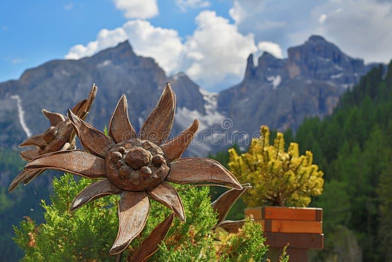 Vacanza di Dolomiti, edelweis davanti al massiccio di Sella Ronda immagine stock
