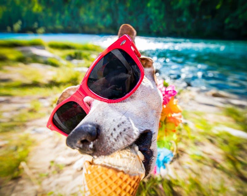 Vacanze estive del cane che leccano il gelato fotografia stock