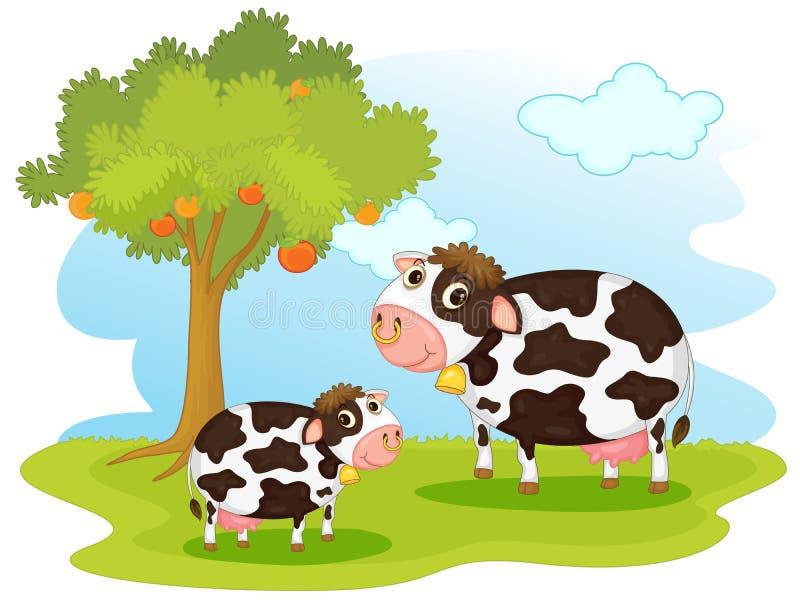 2 vacas ilustração stock