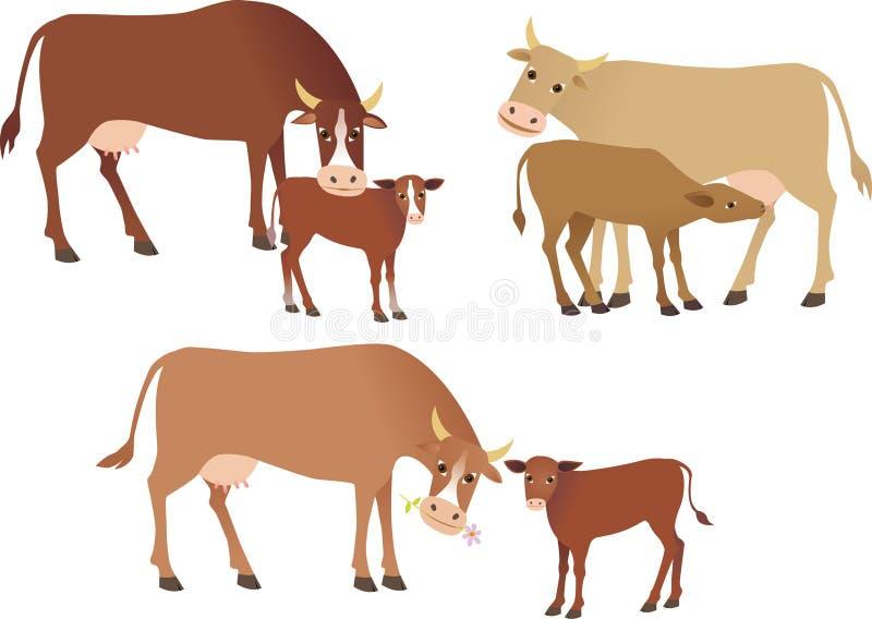 vacas ilustração royalty free