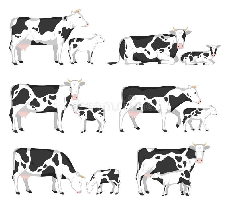 Vacas e vitelas do vetor ilustração royalty free
