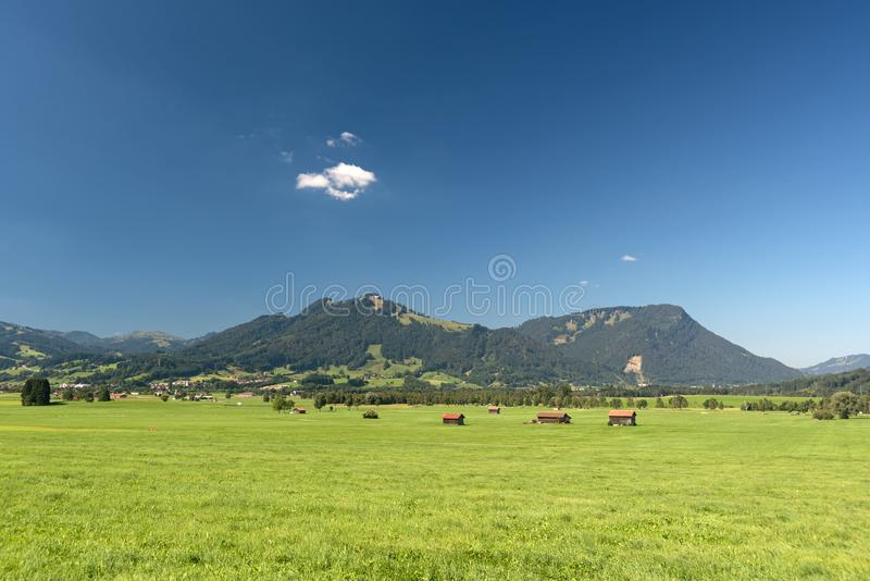 Vacas en la granja foto de archivo