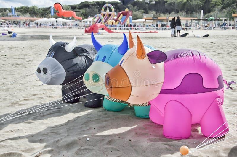 Vacas infláveis em um festival imagens de stock royalty free