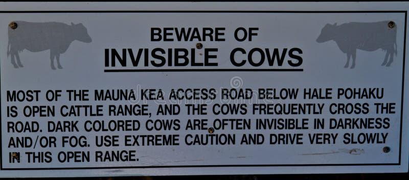 Vacas invisíveis em Mauna Kea na ilha grande fotografia de stock