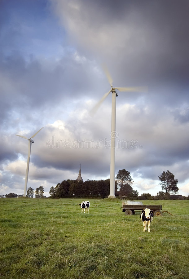 Vacas lecheras foto de archivo