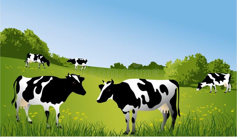 Vacas preto e branco ilustração stock