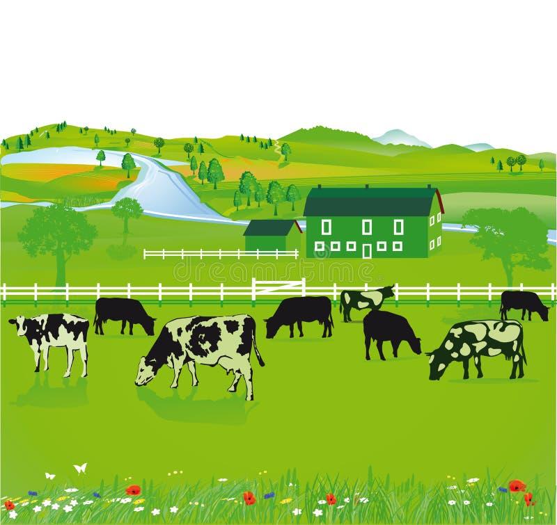 Vacas que pastam em um campo ilustração stock