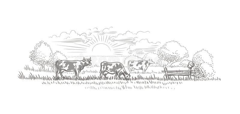 Vacas que pastam em um esboço do vetor da paisagem da terra/natureza ilustração stock