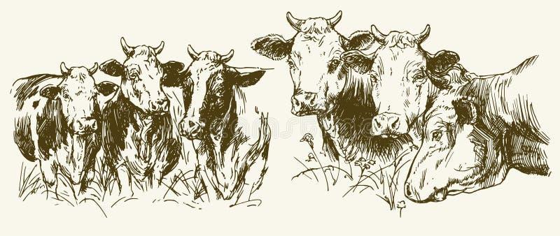 Vacas que pastam no prado ilustração stock