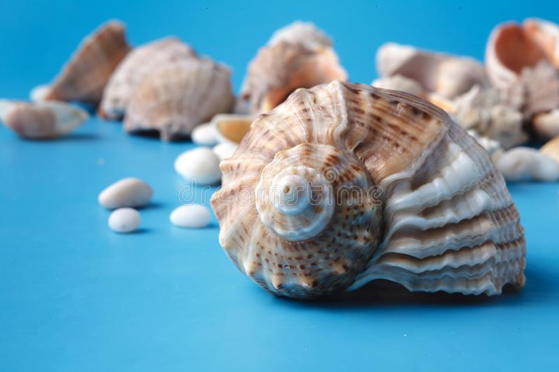 Vacation background with sea shell on blue stock photo