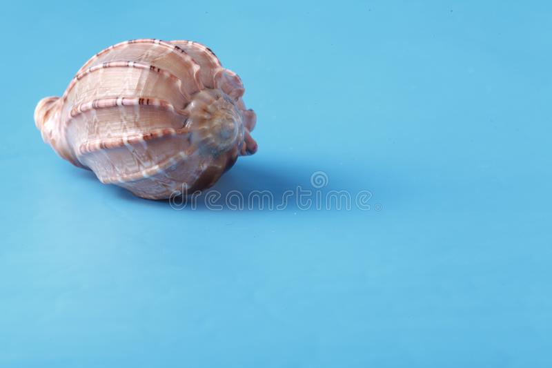 Vacation background with sea shell on blue royalty free stock photography