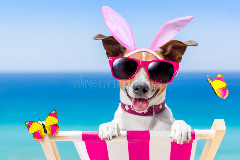 Vacation easter dog. Jack russell dog on a hammock , during easter holidays, with bunny ears, at the beach stock photography