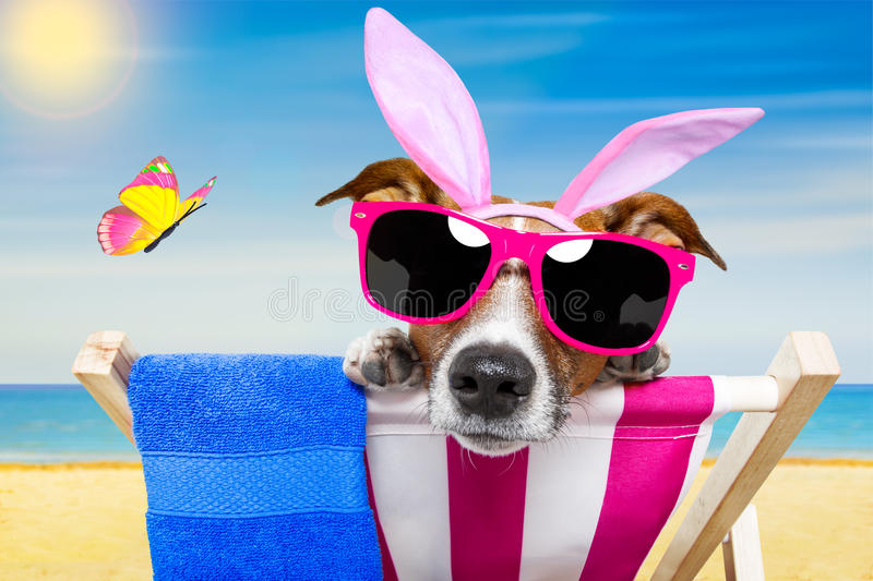 Vacation easter dog. Jack russell dog on a hammock , during easter holidays, with bunny ears, at the beach stock image