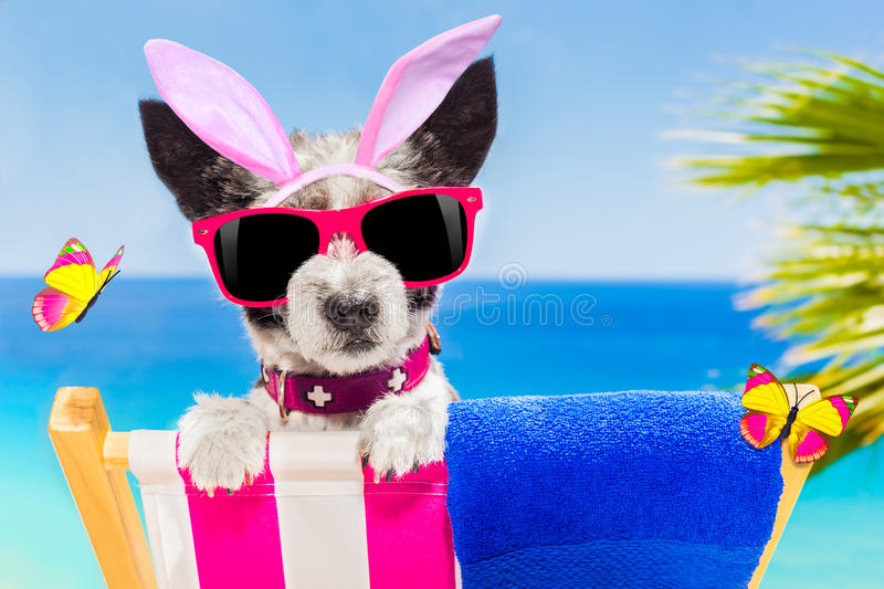 Vacation easter dog. Terrier dog on a hammock , during easter holidays, with bunny ears, at the beach, egg basket included stock images