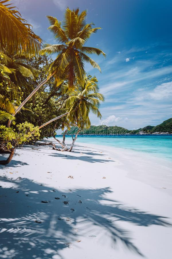Vacation in faraway place. Paradise tropical beach with white sand and palm trees. Long distance travel tourism getaway stock photos