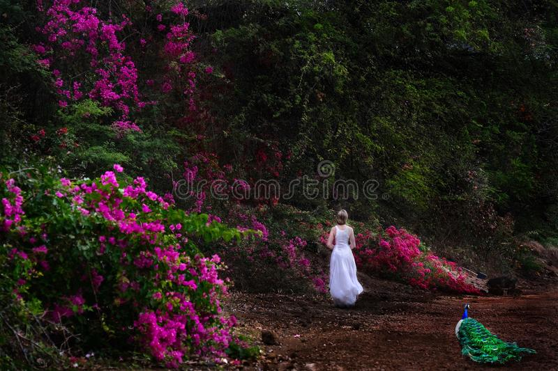 Vacation on Hawaii. Woman walking in botanical garden with pink flowers and a peacock. stock photo