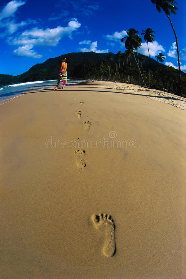 Download Vacation Is In Tropics Royalty Free Stock Photography - Image: 9436967