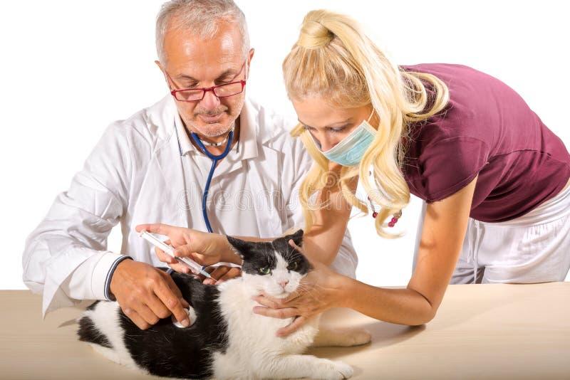 Vaccinazione del gatto fotografia stock libera da diritti