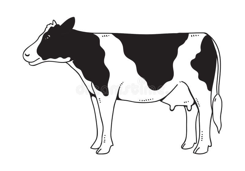 Vache à dessin, vecteur illustration de vecteur
