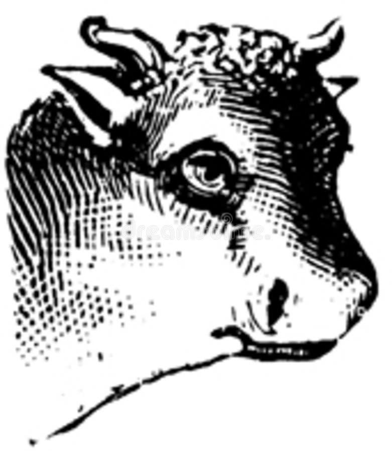 Vache-002 Free Public Domain Cc0 Image