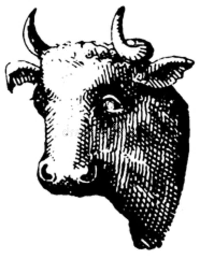 Vache-008 Free Public Domain Cc0 Image