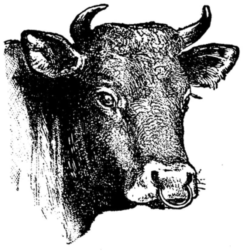 Vache-1-oa Free Public Domain Cc0 Image