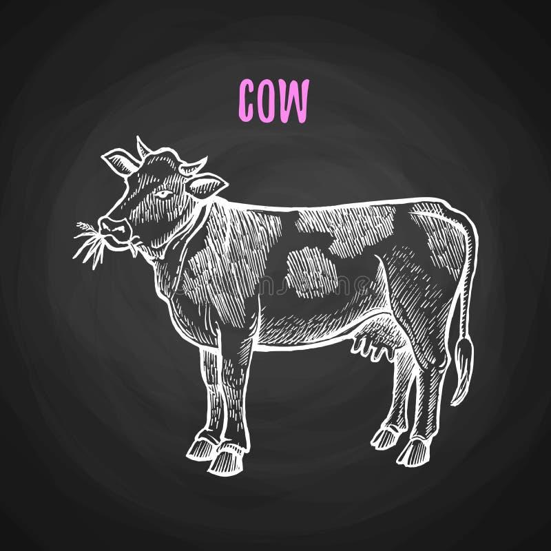 Vache animale dans le style de craie sur le tableau noir illustration libre de droits