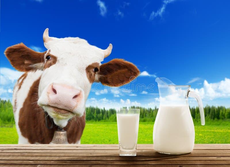 Vache et lait photo stock