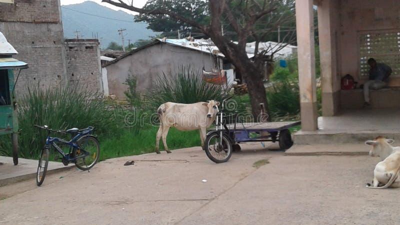 Vache et montagne photos stock