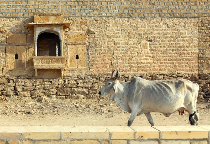 Vache indienne sur le fond du bâtiment antique image libre de droits
