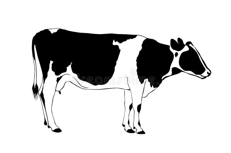 Vache noire et blanche illustration stock