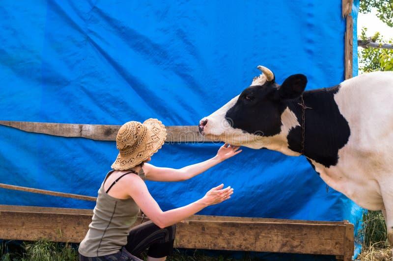 Vache repérée noire et blanche à laiterie dans le village photo stock
