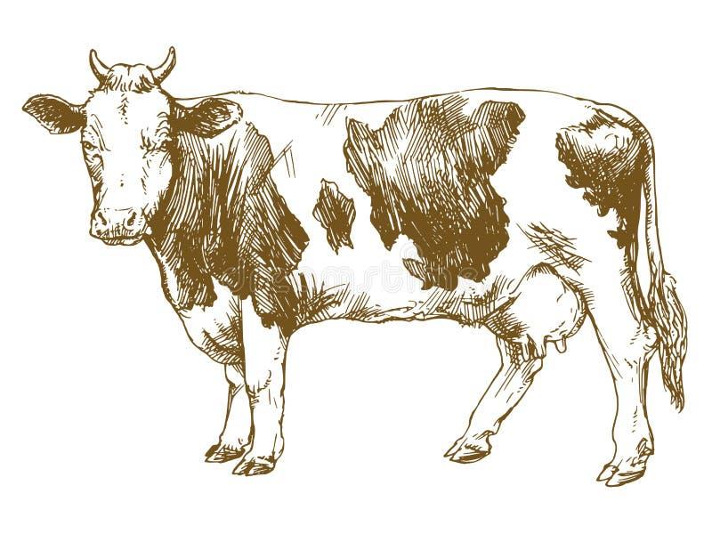 Vache restant devant le fond blanc illustration de vecteur