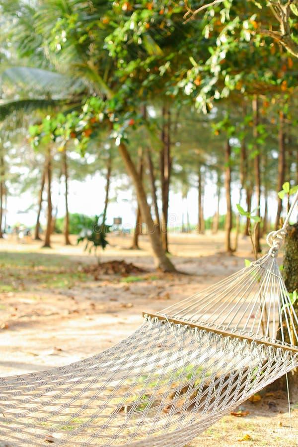 Vacie la hamaca de mimbre blanca con la arena y los árboles en fondo foto de archivo libre de regalías